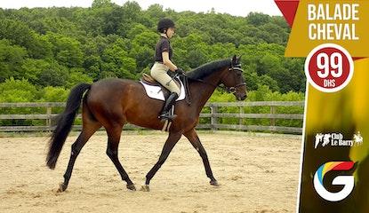 Club le Barry : Goûtez aux plaisirs de la nature et retrouvez la sérénité avec une balade à cheval !